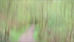 Feeling Spring's silken touch (After-the-Rain) Tags: icm jockeyshield intentionalcameramovement spring may2018 ©joanthirlaway northpennines aonb