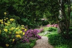Battleston Hill (Stephen Reed) Tags: rhswisley surrey spring garden allium rhododendron nikon d7000 lightroomcc england naturalbeauty