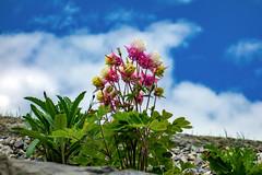 flowers (bernd.kranabetter) Tags: goldegg flowers nature clouds