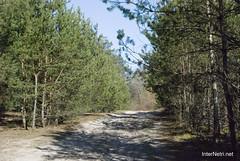 Волинський ліс Лісова дорога InterNetri Ukraine 1292945625
