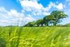 Movement (Darren Speak) Tags: wheat sonya5000 movement yorkshire landscape tree holiday summer