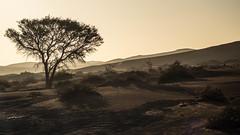 Desert Dusk (Melvinia_) Tags: olympusomdem1 namibia namibie africa afrique afriqueaustrale desert désert sossusvlei dunes sunsetlight shades ombres sand sable landscape paysage emptiness