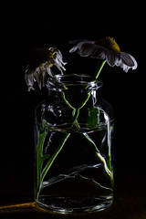 Mother's Day is Over... ([-ChristiaN-]) Tags: macromondays lowkey hmm flower decoration light dark low muttertag mothersday frenchdaisy bottle lightpainting finally