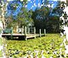 Water lilies at Forest Lake, Brisbane (Aussie~mobs) Tags: brisbane queensland australia waterlilies forestlake creative jigsaw