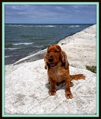 Whisky al mare (magister111) Tags: dogs mare sea romagna
