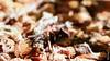 sous la canicule (FranSight) Tags: fransight france fran flickr facebook photo picture canon 100mm28iis macrophoto proxymacro volant papillon ailes zoom eos70d 70d 2018 be back retour printemps spring insect fleurs flower vert green rouge red mauve violet nature eau water long pose freeze time mousse clouange metz moselle entre deux sapinière tree orange chaleur seche yellow forest wood ant fourmis