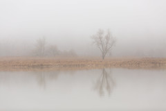 Spring on the Rouge River (Marc McDermott) Tags: spring river rouge ontario toronto pickering canada tree fog still calm reflection