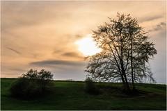 Sonnenbaum (linke64) Tags: thüringen deutschland germany himmel sonne baum hügel natur landschaft wolken wiese frühling