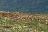 Mimetismo (iLaura_) Tags: nibbioreale natura rapaci mountains