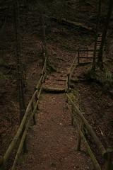 Jos metsään haluat mennä nyt... (K M V) Tags: forest darkness darkforest railings stairs path polku metsä metsäpolku synkkämetsä portaat kaiteet josmetsäänhaluatmennänyt wald dunkel wanderweg steg skog mörkt sombre