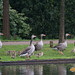 1 mei Watervogels