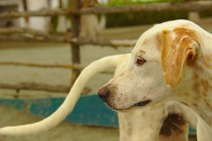 El Perro (Oz Monsalve) Tags: oscaremonsalve3007847305 oscaremonsalveoutlookcom animal colombia colombie dog chien isla fuerte