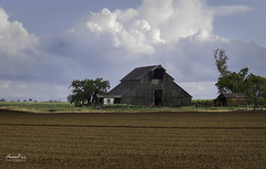 Merced Barn Color (NormFox) Tags: barn californnia clouds dirt drama farm field grass rural shed sky trees atwater california unitedstates us