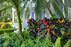 Key West foliage & porch (Andrea Garza ~) Tags: florida keywest foliage tropical tropicalflower tropicalplants palm palms palmtree fern croton philodendron floridakeys island islandlife paradise travel usa wanderlust vacation cottage house landscaping