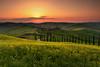 Tuscan Gold (Andrew G Robertson) Tags: tuscany toscana sunset agriturismo baccoleno asciano pienza val dorcia italy sunrise cypress