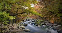 Hazard (Emerald Imaging Photography) Tags: trees river blackheath autumn australia australian australianlandscape australianbush sydney nsw newsouthwales leaves autumnleaves