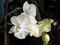 Schönes Wochenende! (ingrid eulenfan) Tags: pflanze blume plants flower blüten orchidee