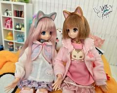 8 (Welt Der Puppen) Tags: anime azone pureneemo manga doll muñeca 16 cat gato meow alissa maya fannyfanny fanny