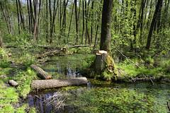 IMGP14143 (Łukasz Z.) Tags: lubelskie rzeczpospolitapolska poleskiparknarodowy nationalpark sigma1750mmf28exdchsm pentaxk3