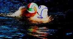 Stolberger SV II 9:7 SSF Bonn (fchmksfkcb) Tags: stolberger sv ii 97 ssf bonn stolbergersv ssfbonn wasserball wassersport waterpolo watersports groundhopping schwimmhalleglashütterweiher schwimmhallestolberg glashütterweiher