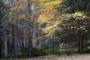 IMG_6571a (ManFromOz) Tags: ©geoffsmith gemaxphotographics autumn breenholdgardens mountwilson bluemountains