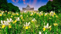 Cinquantenaire FLOWERS (YᗩSᗰIᘉᗴ HᗴᘉS +15 000 000 thx) Tags: 7dwf flower architecture belgium europa aaa namuroise look photo friends be wow yasminehens interest intersting eu fr greatphotographers lanamuroise tellmeastory flickering fuji fujifilm gfx 50s fujifilmgfx50s