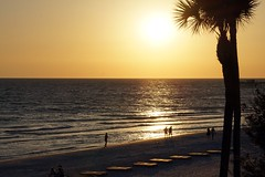 North Redington Beach (Sautterry) Tags: florida gulfofmexico northredingtonbeach beach palm sun sunset