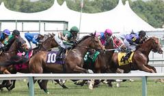 2018 Pimlico Race track (90) (maskirovka77) Tags: pimlico dirt mare race racehorse threeyearold turf yearling