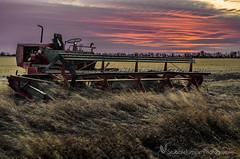 Versatile Swather (Stubble Jumper) Tags: abandoned alberta agriculture swather wind rower versatile sunset prairie farm harvest
