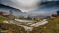 Rice paddies into the morning fog (catoledo) Tags: 2018 maichau sapa vietnam clouds landscape laocai ricefields ttsapa làocai vn matchpointwinner mpt650