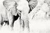 Elephant (pixelarized) Tags: elephant olifant licht light zuidafrika southafrica krugerpark wit white wildlife highkey