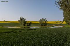 "Hoikendorf, ""Vogelparadies auf dem Feld"" (joergpeterjunk) Tags: hoikendorf outdoor baum baumgruppe feld teich himmel canoneos5dmarkiv canonef24105mmf4lisusm"