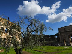 Rome 2018 (Scorpion-66) Tags: colosseum rome artcity olympusem5markii olympuszuiko1240 colors italy