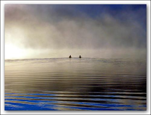 Geese in Mist