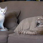 Two cats on the couch