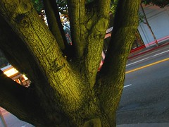 green tree street (pbo31) Tags: california park street trees summer color tree green nature northerncalifornia landscape ilovenature branch glow natural earth pass grow august 2006 ty sanfranciscobayarea bayarea eastbay growing sanleandro californian lightstream metroplex metroarea