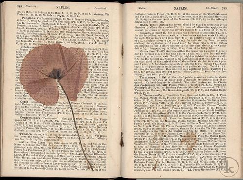 pg 388-389