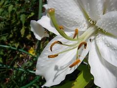 White Flower (Dave-D) Tags: white plant flower macro garden acehigh carsnap interestingness498 i500 scoreme40 thebiggestgroup criticismwelcome daviddunn explore27aug06 flickrscorer21