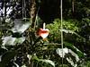 PICT0102 (randall_how) Tags: trail panama quetzals