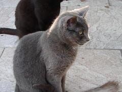 feline aids