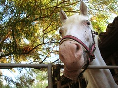 funny horse (flavio.leone) Tags: italy horse funny estate 2006 flavio sicily cavallo sicilia isola triscina castelvetrano isola81 flavioleone tousethisphotopleasecontactmewwwflavioleoneit
