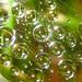 Biospheres - by Jim