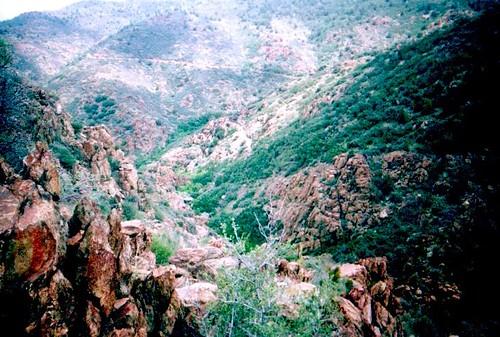 Mescal Canyon, Mingus Mountain, Jerome AZ