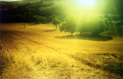 (Yellow Bear) Tags: trees copyright sun field yellow lomo lca lomography hay allrightsreserved clairegriffiths qum01