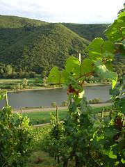 Vinyards (mattrkeyworth) Tags: autumn river germany deutschland vines sony harvest hills grapes allemagne v1 vinyard mosel dscv1 mattrkeyworth