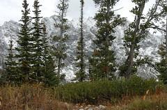 DJW_0016 (druewolfe) Tags: bear snow mountains dan hiking moose nate wyoming elk abe tetons jennylake drue tetonsnationalpark