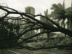 Topple (joaqy) Tags: bw storm photoshop philippines f30 finepix fujifilm makati noise toned fujif30 milenyo