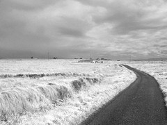 Tory Island road copy (mtcspike) Tags: fauxinfrared