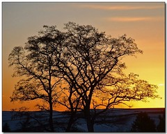 Another Winter Sunset (2) (Roger Lynn) Tags: winter sunset snow tree moscow branches idaho golfcourse universityofidaho palouse