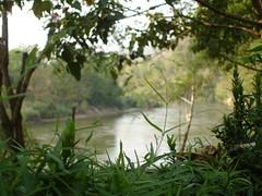 HomePhutoey (Jane Jc) Tags: flower tree green home noon phu toey at